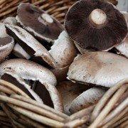 Pilze im eigenen Garten züchten: so wird's gemacht.
