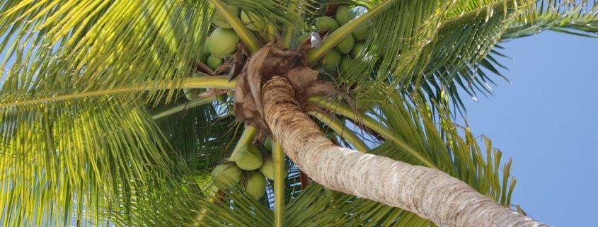 Palmöl und seine Schattenseiten