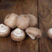 Pilze - Die Saison beginnt: Tipps für Sammler