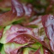 Das musst Du bei Salat aus dem Supermarkt beachten