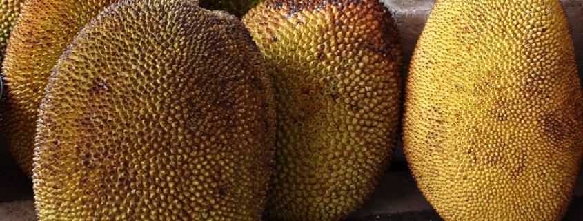 Tropenfrucht Jackfrucht erobert Vegetarierherzen