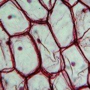 Lagerung und Transport von Stammzellen zur Limbus-Stammzelleninsuffizienz