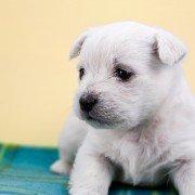 Welche Vorteile bieten Hunde vom Züchter?