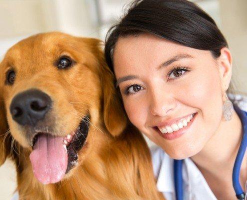 Ärzte und Veterinäre