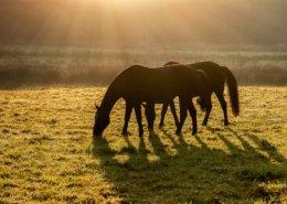 Diagnose ECS - Equines Cushing Syndrom - kritisch hinterfragt