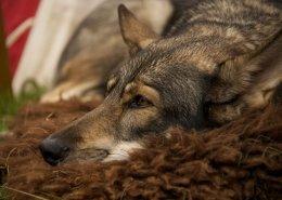 Fit mit Hund im Winter - was du tun kannst