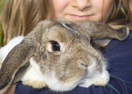 Tierkrankheiten Hasen & Nagetiere