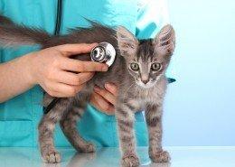 Tierkrankheiten Katzen