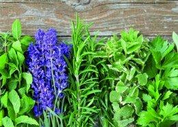 Kräuter und Pflanzen für Katzen