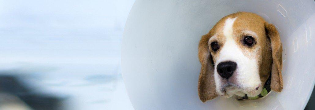 Krankheiten Tiere - Slider gross
