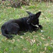 Homöopathie für Hunde – Von Kropf bis Lungenentzündung