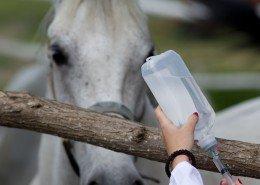 Tierkrankheiten Pferde