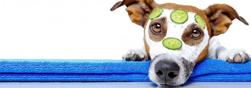 Pflege Tiere - Slider gross