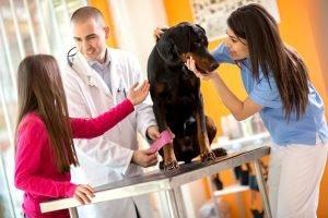 Osteopathen für Tiere