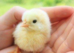 Tierkrankheiten Vögel