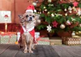 Weihnachten mit Hund - Tipps für relaxte Tage
